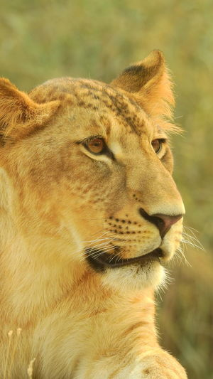 Profile View Animals In The Wild Close-up Day Outdoors Portrait Nature Mammal No People