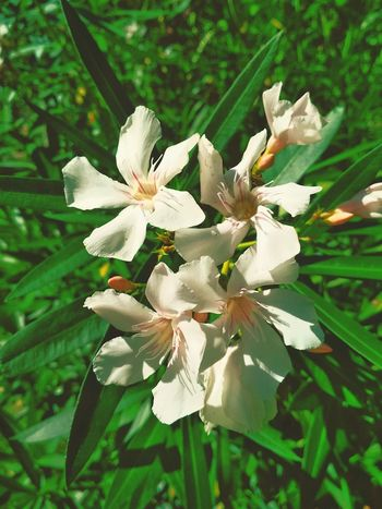 Flower Head Flower Leaf Tree Petal White Color Branch Close-up Plant Green Color Wildflower Botany Plant Life Flowering Plant In Bloom Blooming Uncultivated