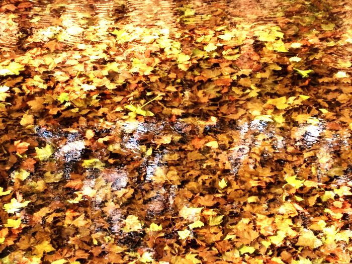 Full frame shot of dry leaves floating on water