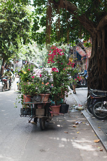 ASIA Asian  Life Market Vietnam Culture Day Flower Flowers Hanoi Vietnam  Lifestyles Motorbike Nature No People Outdoors Sell Southeast Asia Street Street Photography Streetphotography Tree Adventures In The City