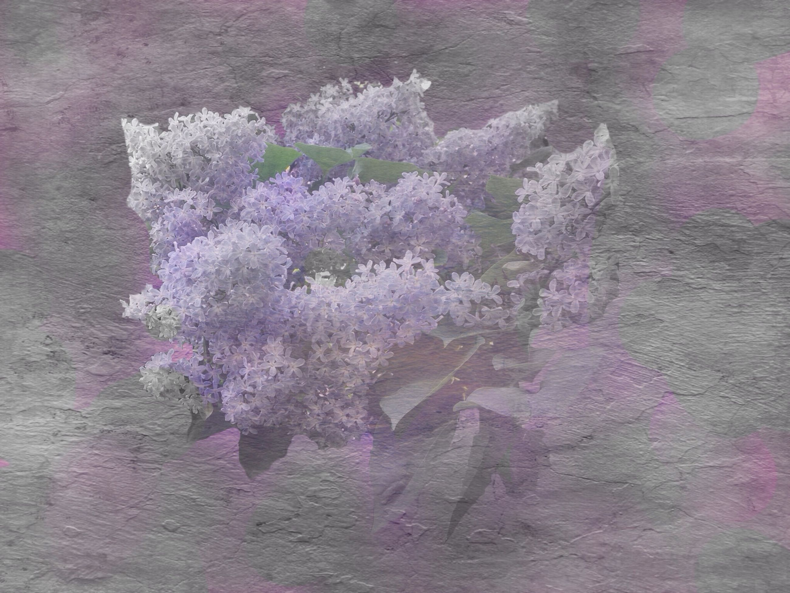 flower, growth, plant, nature, pink color, fragility, wall - building feature, high angle view, freshness, beauty in nature, close-up, petal, outdoors, no people, day, textured, purple, blooming, field, growing