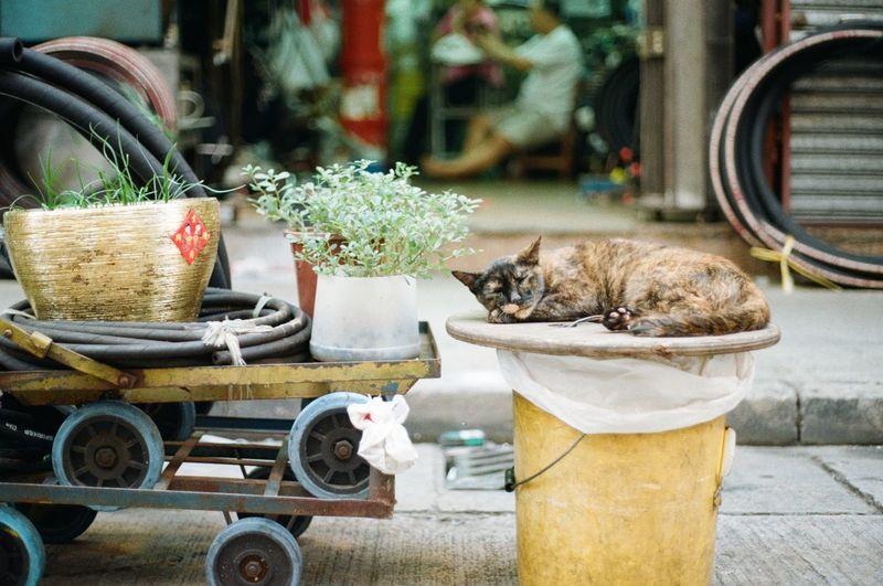 Cat Sitting On Bucket