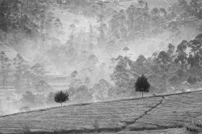 Morning dew Bandung Black And White Black And White Photography Blackandwhite Blackandwhite Photography INDONESIA Landscape Monochrome Monochrome Landscape Monochrome Photography Pangalengan