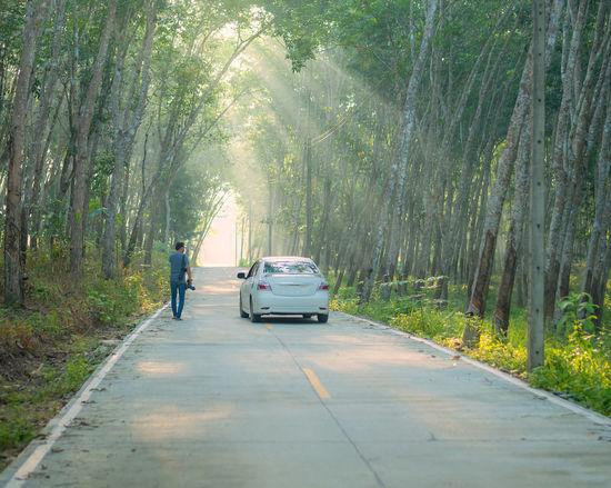Nakhon Si Thammarat Thailand Travel Adventure Car Forest Outdoors Photographer Tree