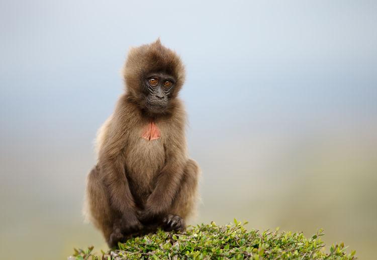 Portrait of monkey sitting on plant against sky