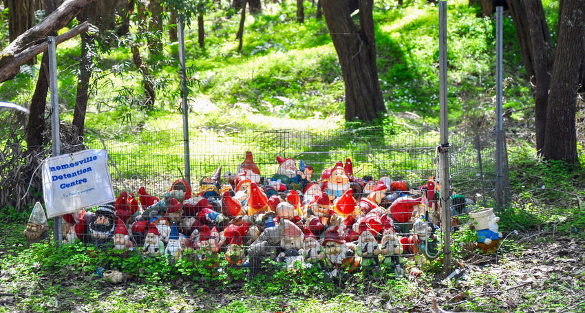 Humour at Gnomesville in the quirky forest tourist attraction in Wellington Mill, Western Australia. Colorful Detention Center Fantasy Fence Ferguson Valley Figurines  Forest Funny Garden Gnomes Gnomes Gnomesville Grass Green Humor Landscape Quirky Tourist Attraction  Travel Destinations Trees Vibrant Color Wellington Mill Western Australia Whimsical WoodLand Woods