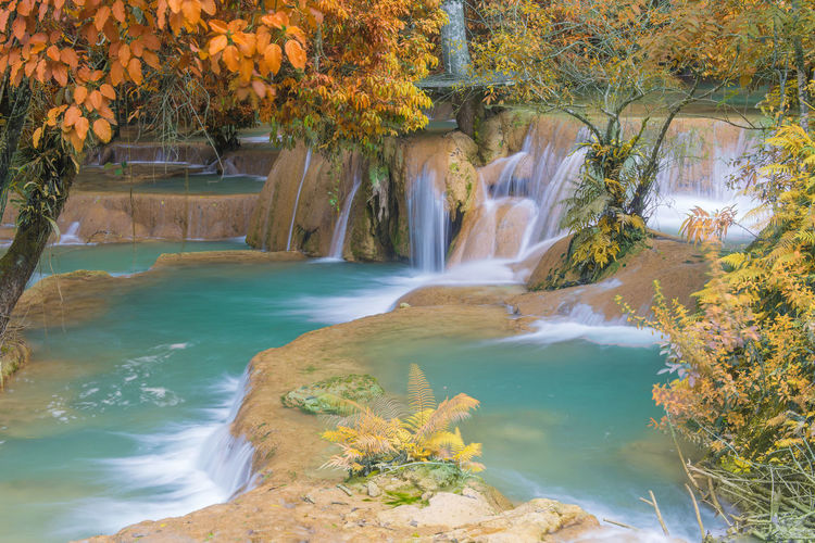 Water Beauty In Nature Plant Nature Tree Scenics - Nature Motion Waterfall No People Day Autumn Growth Flowing Water River Outdoors Tranquility Flowing Long Exposure Plant Part Change Power In Nature