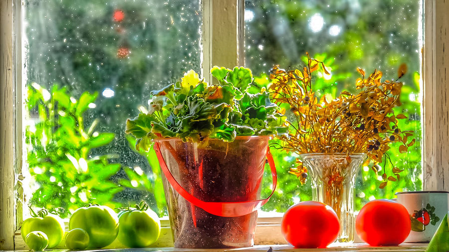 Bright Red Day Green Color Growth Indoors  Nature Morte No People Peasant Life Plant Potted Plant Summer Time In The Country Vegetables Window