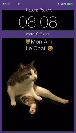 08H08... 😃Mon Ami Le Chat😺 HEURE POLARIS Mon Ami Le Chat Heure Hour Clock Time CHATFIE Cats Of EyeEm Catfie Cat♡ Cat Chat Relaxing