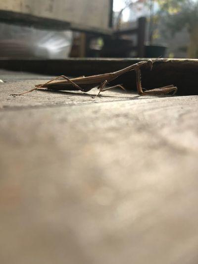 가을타나봐... Iphonephotography IPhoneography Nature Leechangwon Mantis