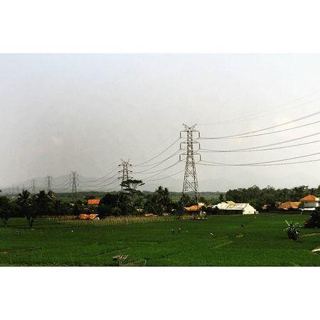 The power in the green. Pylonporn Pylon Py_lon Sutet electrical sky fields ricefields green green_green