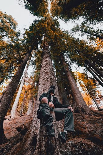 People And Places Person Himalayas Into The Woods Low Angle View Into The Wild Forest Tree Trunk Adventure Eyeem Market EyeEmBestPics EyeEm Best Shots EyeEm Scenics Beauty In Nature WoodLand Tranquility Exploration Carefree Nature Non-urban Scene Outdoors Casual Clothing Tree Tranquil Scene