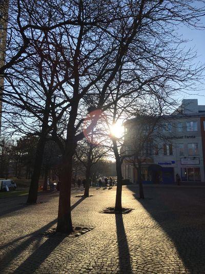 Farsta Centrum Trees Shadows Outdoors Sunlight And Shadow Sunlight Bare Trees Buildings Stone Squares Sweden Godaminnen