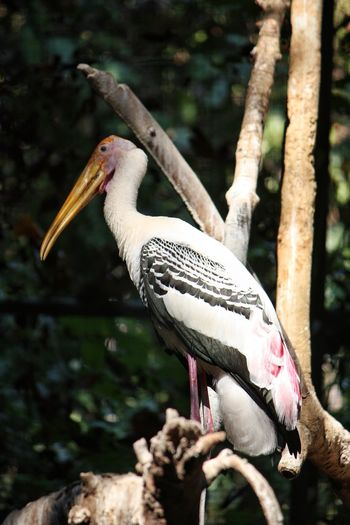 Animal Wildlife Wings Bird