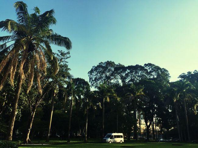 My Best Photo 2015 Vietnam Trip Palm Trees