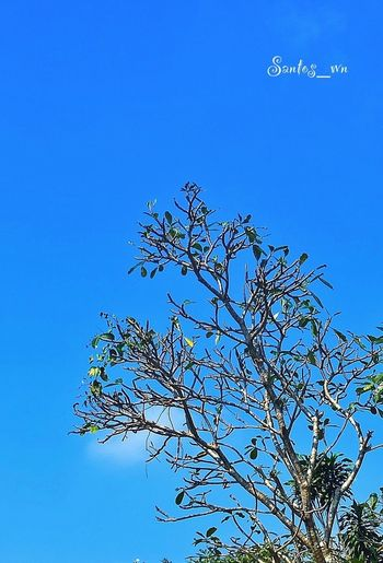 Tree And Sky EyeEm Indonesia Lookingup