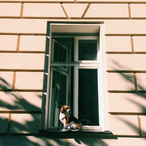 Dog sitting on window sill