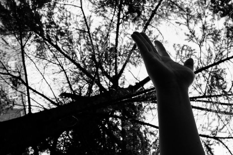 Offering a Hand EyeEmNewHere Branch Day Hand Helping Hand Low Angle View Nature One Person Outdoors Plant Silhouette Sky Tree Tree Trunk Trunk