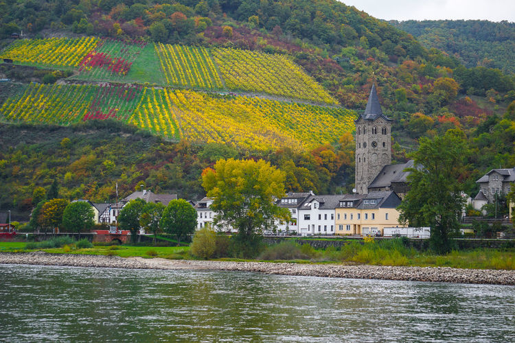 Houses in town by rhine river against trees