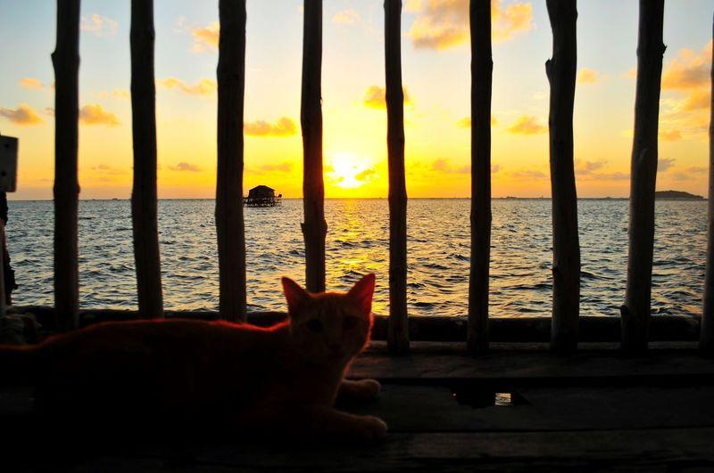 Sunlight Orange Illustration Warm Summer Cute Cute Pets EyeEm Selects EyeEmBestPics Mood Sunrise_sunsets_aroundworld Water Sea Sunset Pets Silhouette Beach Domestic Cat Sky Horizon Over Water Close-up Romantic Sky Dramatic Sky Atmospheric Mood Sunrise Cat Moody Sky