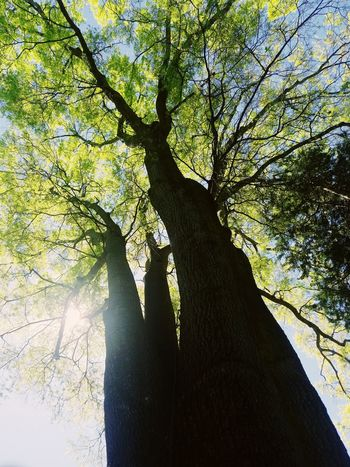 Tree Low Angle View Tree Trunk Outdoors Beauty In Nature