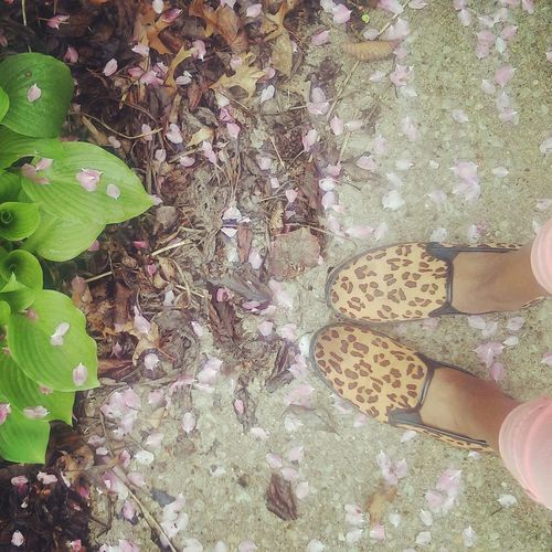 I love spring Spring Flowers Shoes ♥ That's Me Garden Selfportrait Iowa