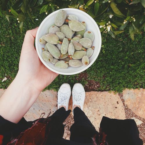Low section of woman holding bowl of unripe almonds