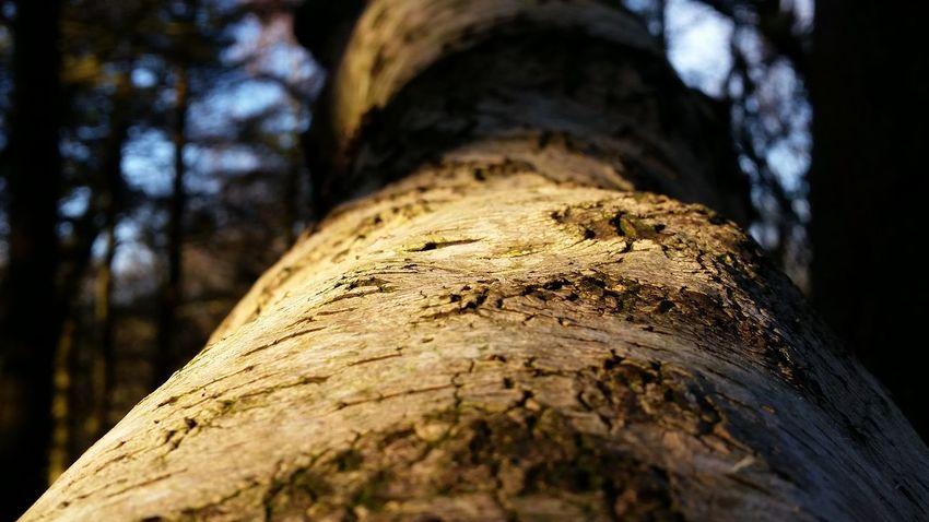 Tree Bark Sun & Trees Tandlehill Park Tree Trees Forest WoodLand Birch Trees Birch Bark Birch Tree