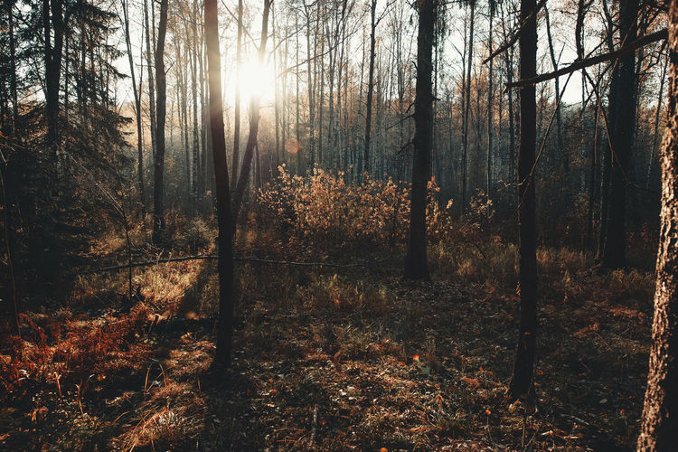 Tree Forest Land Plant Tranquility WoodLand Tree Trunk Trunk Nature No People Tranquil Scene Beauty In Nature Day Sunlight Scenics - Nature Growth Non-urban Scene Outdoors Landscape Sky Change Autumn EyeEm Nature Lover EyeEm Best Shots