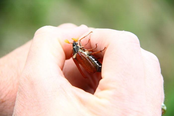 Bugslife Bug EyeEm Selects Human Hand Insect Close-up Leg