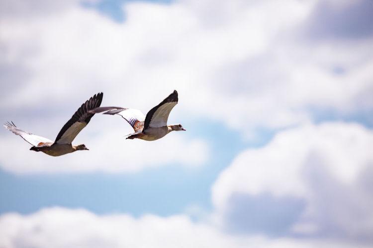 ©️898 goose.