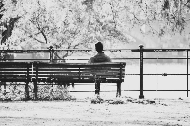 Rear view of man sitting on bench in park