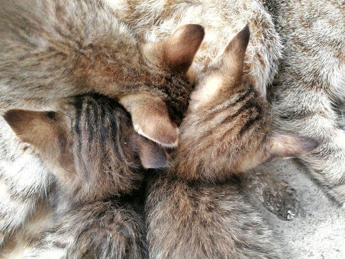 Fur UnderSea Full Frame Backgrounds Close-up Domestic Cat Feline Cat Kitten Stray Animal