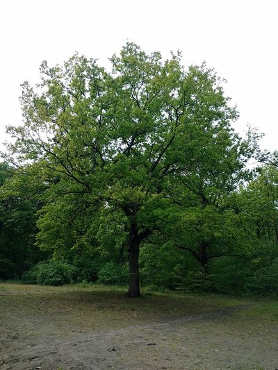 Beauty In Nature Day Growth Landscape Nature No People Outdoors Sky Tranquility Tree