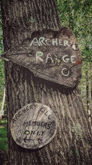 Signage Archery Target Archery Range Archery Tree Full Frame Pattern Close-up Textured  Rugged Woods Bark Rough Tree Ring