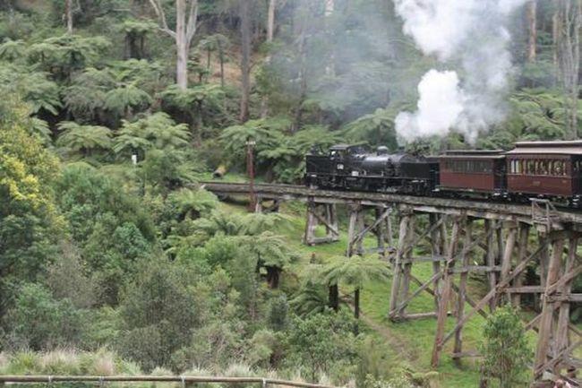 Puffing Billy Steamtrain Steam Train Bridge Rickety Fundayout Nofilternoedit