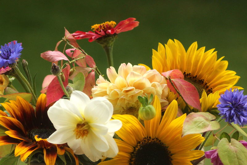 Autumn Bouquet Blooming Bunch Of Flowers Close-up Flower Flower Head Fragility Freshness Sunflowers🌻