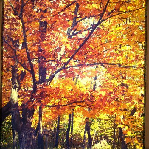 Autumn Nature Vibrant Color Solvay House Solitude Hospice Sunlight Reflection Autumn2016