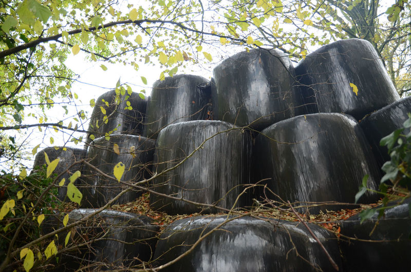 Agriculture Fermentation Fodder Low Angle View Outdoors Preparing For Winter Silage Bales