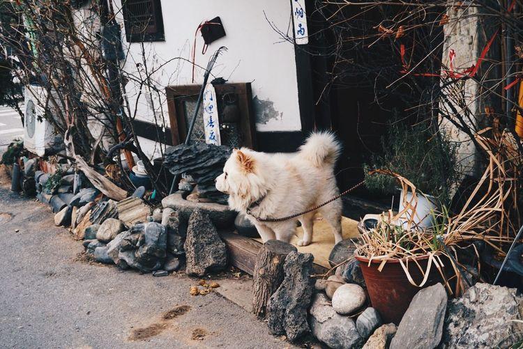 Sonyalpha5100 Seoul Seoul_korea Korea Photo Dog Samcheong-dong