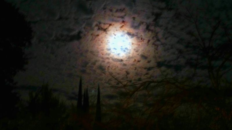 A little moonlight magick.Hanging Out Taking Photos Check This Out Relaxing Hi! Enjoying Life World Photography Day I Love It ❤