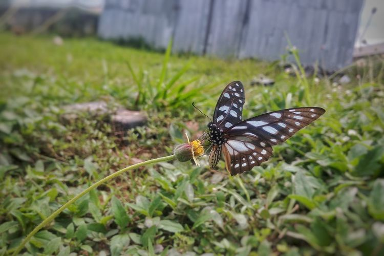 Give me some sugar Butterfly - Insect Insect Animal Themes One Animal Animals In The Wild Butterfly Nature Animal Wildlife No People Outdoors Full Length Day Plant Grass Spread Wings Close-up Beauty In Nature Fragility Freshness Perching Ifechiworks Mobilephotography