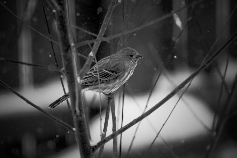 EyeEm Selects Animal Wildlife One Animal Animal Themes Animal Vertebrate Animals In The Wild Perching Bird Focus On Foreground No People Tree Branch Day Nature Close-up Selective Focus Outdoors Plant
