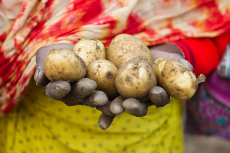 Close-up of hands holding potatoes