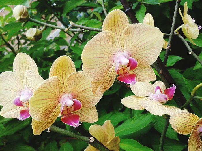 Flowers EyeEm Flower