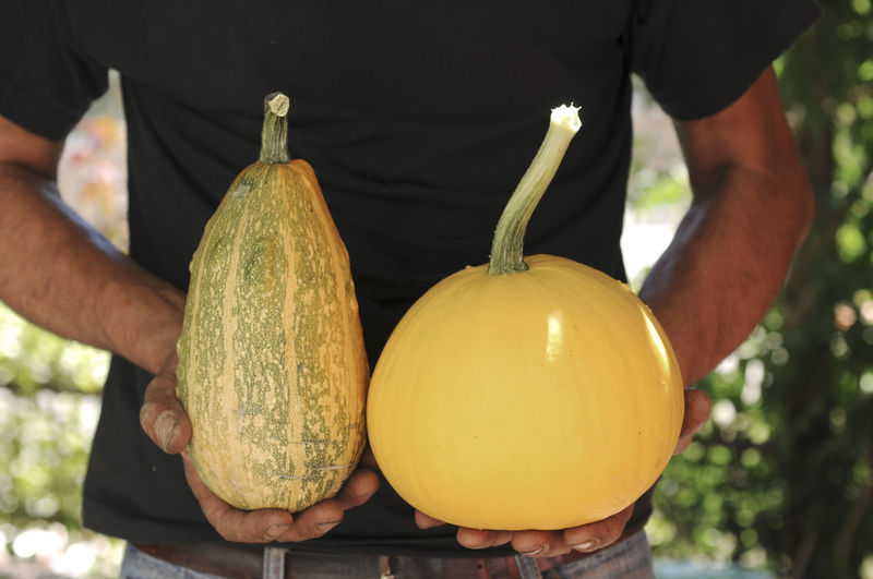 Midsection Of Man Holding Squashes