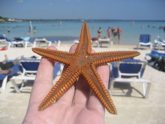 Starfish  Sea