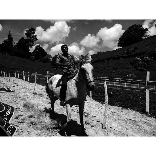 Blackandwhitephotography SocialDocumentary Horse Monochrome Lensculture Magnumphoto Art Opensociety