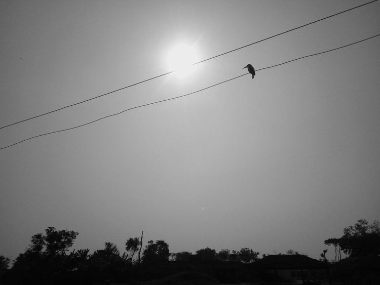 Tree Silhouette Nature No People Flock Of Birds Beauty In Nature Bird Scenics Sky Beauty In Nature Birds Black & White Black And White Collection  Close-up Nature Field Tree Agriculture King Fisher Bird On Wire