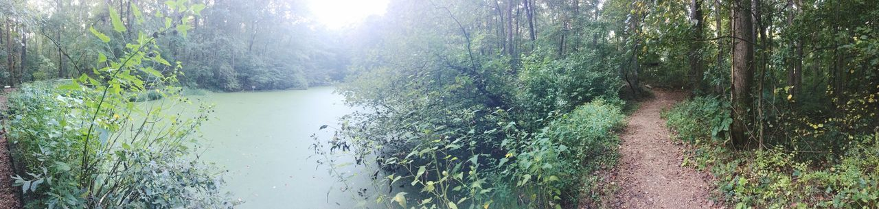 Walkin Down This Trail😬 Nature Water Beauty In Nature Plant Sonyalpha5000 Swamp Walking Around